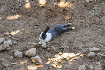 Rabbit laying on the ground photo