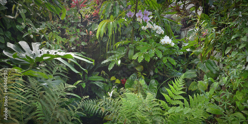 Wall mural tropical forest