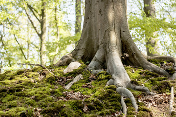 moss and roots