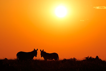 Zebras silhouetted against a red sunrise