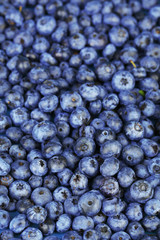 Tasty ripe blueberries, close up