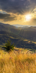 small pine tree among the grass in mountains at sunset