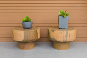 Plants in modern grey pot on round wood table