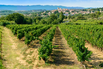 Languedoc vineyards around Beziers Herault France