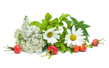 medicinal herbs isolated on white background. horizontal photo.