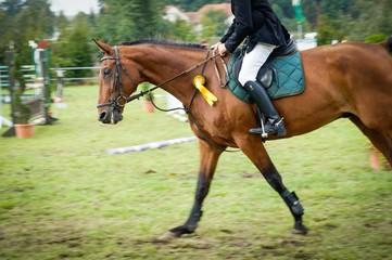 Reitturnier, Pferd mit Reiter von der Seite