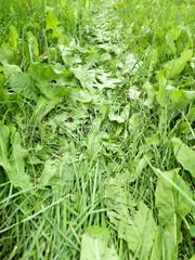 Fahrspur im Gras
