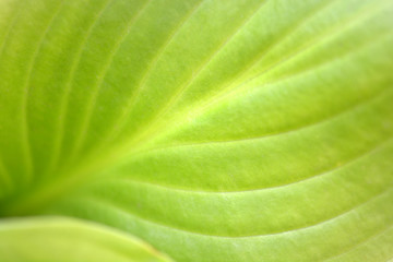 Macro photo of leaf green and fresh