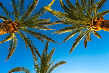 Three branches of palm trees against the sky