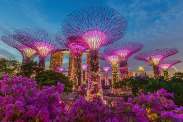 Foto op Aluminium Singapore Night view of The Supertree Grove at Gardens by the Bay