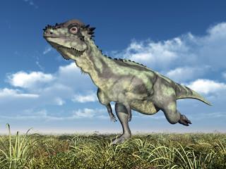 Dinosaur Pachycephalosaurus