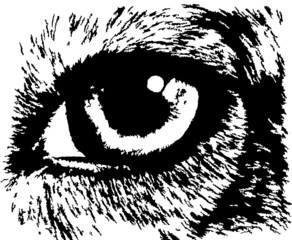Monochrome animal eye