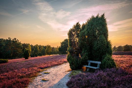 Lüneburger Heide; Bank im Sonnenuntergang