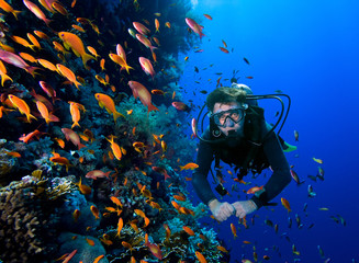 Diver swims through tropical fish on coral reef Wall mural