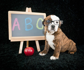 Wall Mural - Back To School Puppy