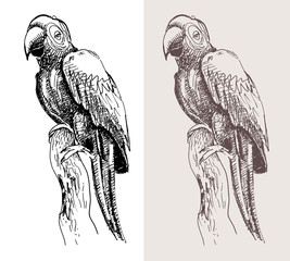 original artwork parrot, black sketch drawing bird