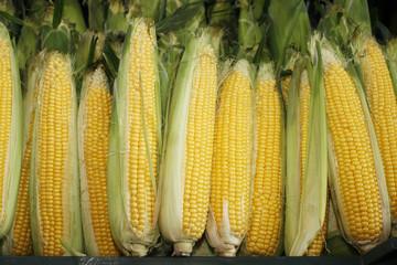 Fresh sweet corn in the farmers market