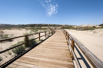 Wooden walkway over dunes
