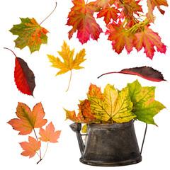 schöne Herbstfreisteller