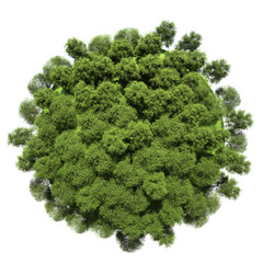 Miniature planet with leafy vegetation
