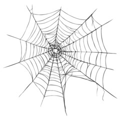 Vector Spider's Web on White Background
