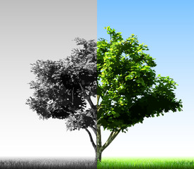 Two colorful halves of the tree. Vector