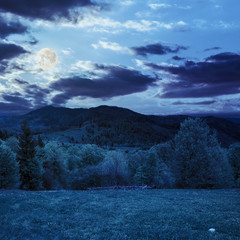 trees near valley in mountains at night