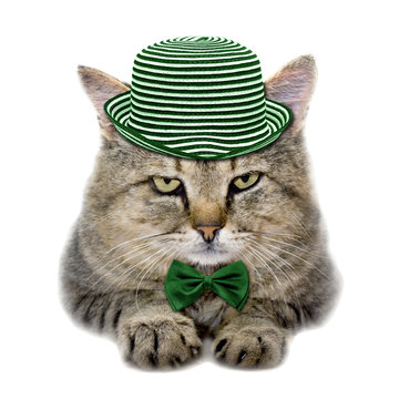 cat in a green hat and a butterfly tie