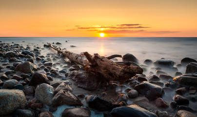 Wyrwane drzewo na kamienistej ,morskiej plaży