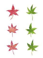 赤と緑のもみじ 水彩イラストのセット
