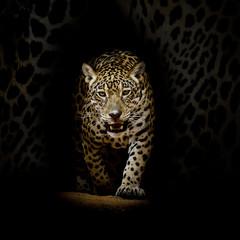 Canvas Prints Leopard portrait