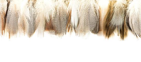 Bird feather Wall mural