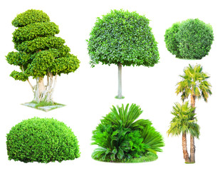 Collage green trees and bushes isolated on white
