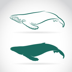 Vector image of whale on white background