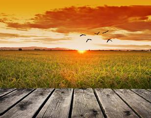 el sol acariciando el campo de arroz