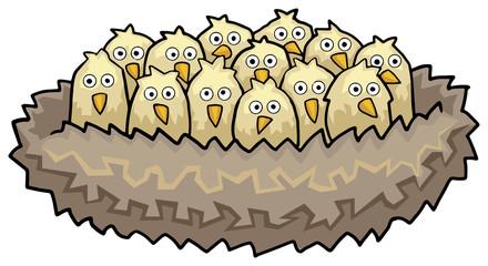 Bunch of little bird chicks sitting in a nest