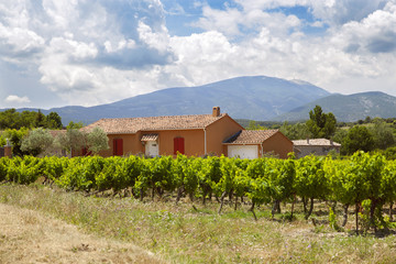 The traditional provence house and a vineyard against mountains