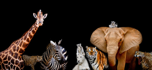 Wall Murals Zebra A group of animals are together on a black background with text