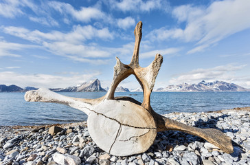 Old whale bone on the coast of Spitsbergen, Arctic