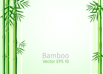 vector illustration  bunch of bamboo leaves background