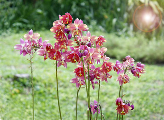 mix of beautiful orchids