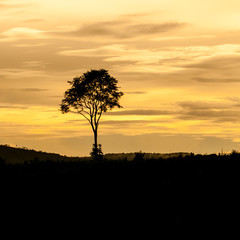 Landscape of sunset with cloudy orange sky and a silhouette of t