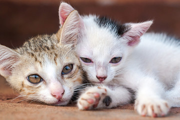 Two kittens close-up