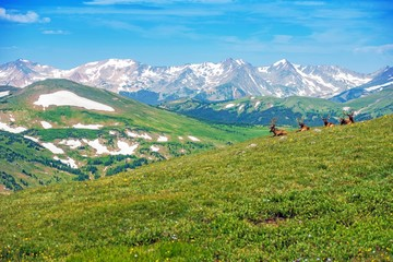 Wall Mural - Colorado Panorama with Elks