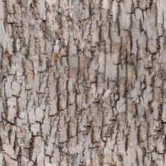 seamless bark tree