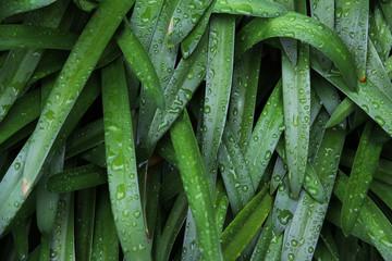 雨の中の葉っぱ