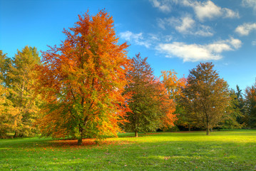 Beautiful autumn tree with fallen dry leaves