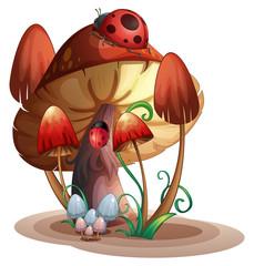 A mushroom with a ladybug