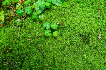 Green leaves and moss