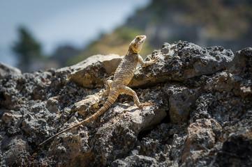 Lizard at sunspot